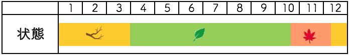 イチョウの年間樹種姿