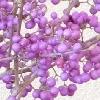 紫式部の画像